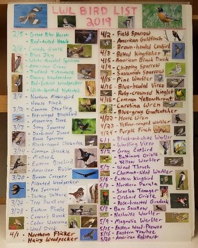 list of bird species