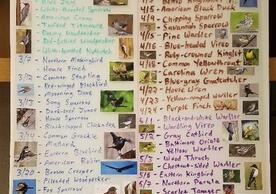 list of bird species